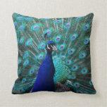 Pretty Peacock Pillow