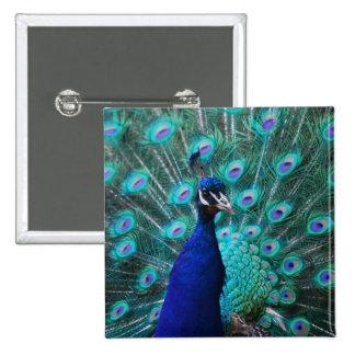 Pretty Peacock Pin