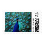 Pretty Peacock Postage Stamp