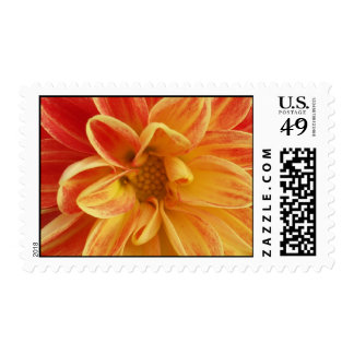 Pretty Pedals Postage Stamp