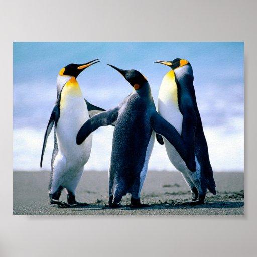 Pretty Penguins Posing Print