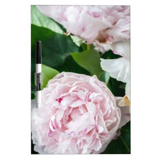 Pretty Peonies Pastel Bouquet Dry-Erase Board
