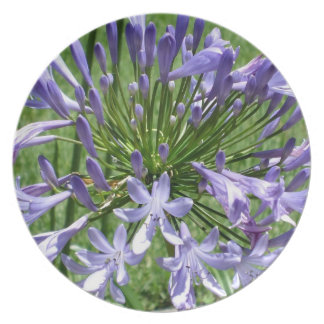 Pretty Peter Pan Agapanthus Blooming Party Plates