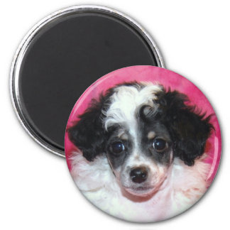 Pretty Phantom Parti Poodle Puppy on Pink 2 Inch Round Magnet