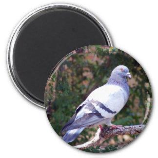 Pretty Pigeon 2 Inch Round Magnet
