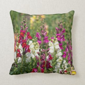 Pretty pillow of Snapdragons.