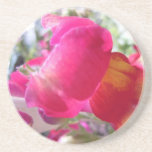 Pretty Pink and White Snaps Drink Coaster