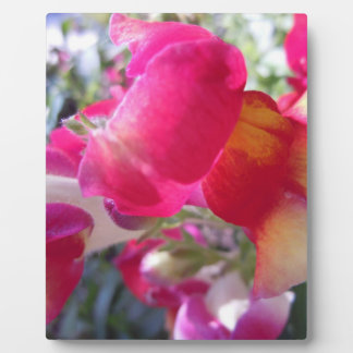 Pretty Pink and White Snaps Plaque