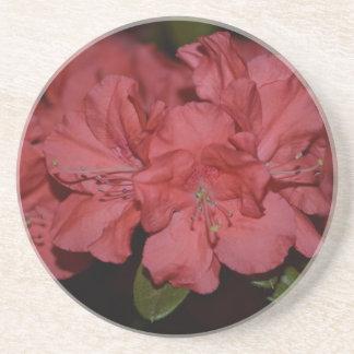 Pretty Pink Azaleas Drink Coaster