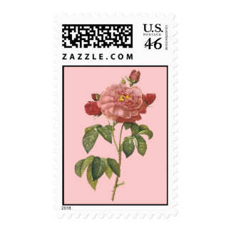 Pretty Pink Botanicals Vintage Flower Stamps