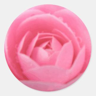 Pretty Pink Camellia Flower Sticker