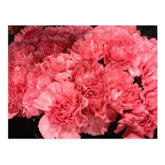 Pretty Pink Carnation Flowers