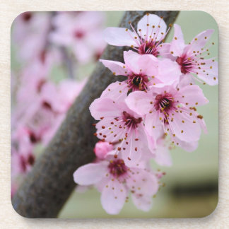Pretty Pink Cherry Blossom Flowers Coaster