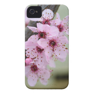 Pretty Pink Cherry Blossom Flowers iPhone 4 Case-Mate Case