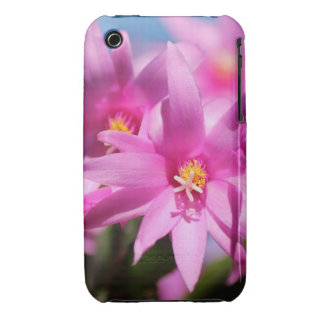 Pretty Pink Christmas Cactus Flowers Blooming iPhone 3 Cover