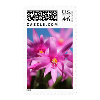 Pretty Pink Christmas Cactus Flowers Blooming Stamp
