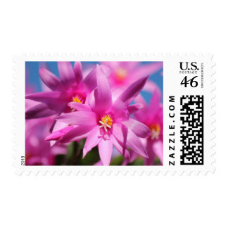 Pretty Pink Christmas Cactus Flowers Blooming Postage Stamps