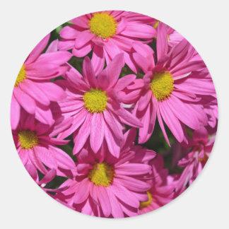 Pretty pink chrysanthemum flowers print classic round sticker