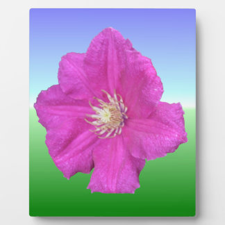 Pretty Pink Clematis Flower Plaque