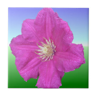 Pretty Pink Clematis Flower Small Square Tile