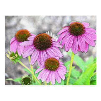 Pretty Pink Coneflower Postcard