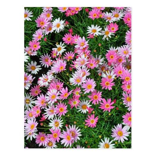 Pretty pink patterns - photo#24