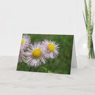 Pretty Pink Daisy-Like Flowers card