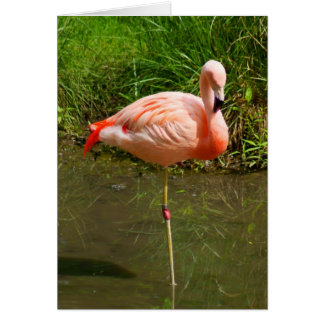 Pretty Pink Flamingo Customizable Greeting Cards