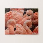 Pretty pink flamingo print puzzle