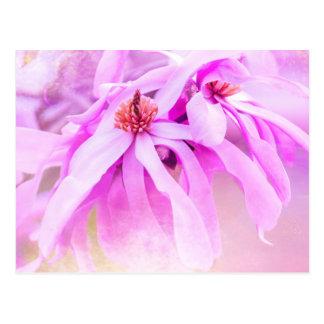 Pretty Pink Flower Blossoms Postcard