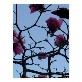 Pretty Pink Flowers against a Blue Sky Postcard