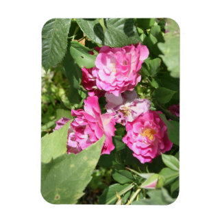 Pretty Pink Flowers Magnet