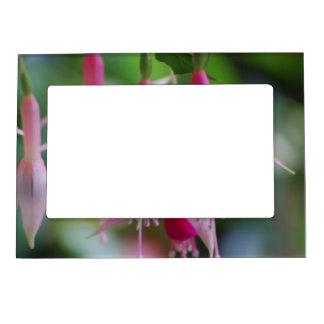 Pretty Pink Fuchsia Flowers Magnetic Frame