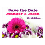 Pretty Pink Gerber Daisy Wedding Save the Date Post Cards