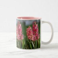 Pretty, pink Hyacinth
