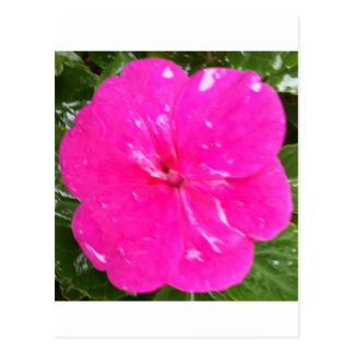 Pretty Pink Impatience Postcard