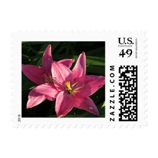 Pretty Pink Lilies Stamps