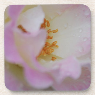 Pretty pink macro rose drink coaster