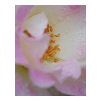 Pretty pink macro rose letterhead design