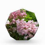 Pretty Pink Mountain Laurel Flowers Acrylic Award