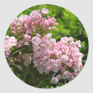 Pretty Pink Mountain Laurel Flowers Classic Round Sticker