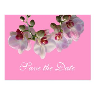 pretty pink orchid flowers pink save the date postcards