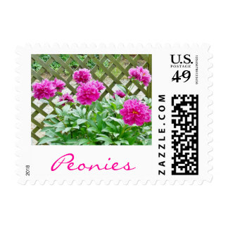 Pretty Pink Peony Bush By The Fence Postage
