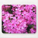Pretty Pink Phlox Mouse Pads