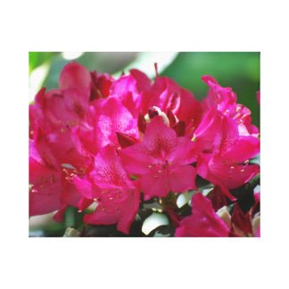 Pretty Pink Rhododendron Gallery Wrap Canvas