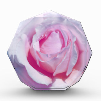 Pretty Pink Rose Awards