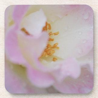 Pretty pink rose beverage coaster