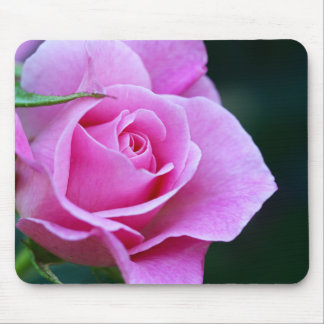Pretty Pink Rose Photograph Mouse Pad