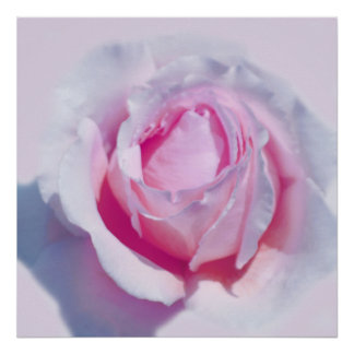 Pretty Pink Rose Poster