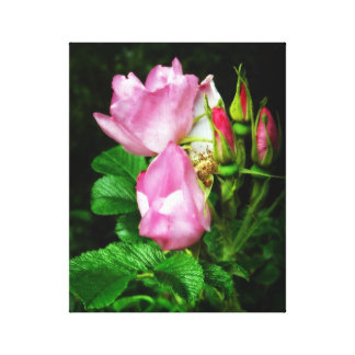 Pretty Pink Roses and Rosebuds Canvas Print